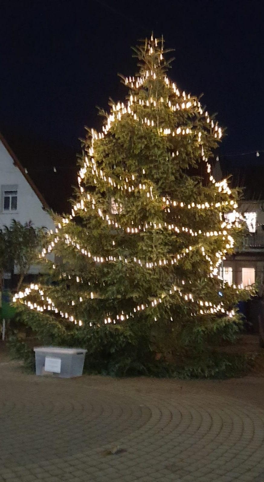 Tannenbaum_Königstuhlstraße