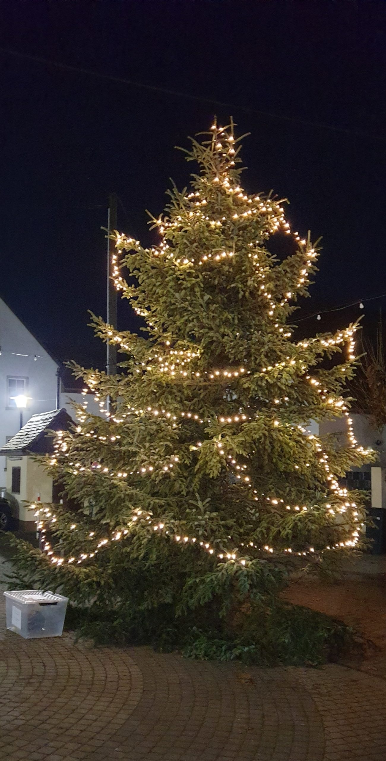 Tannenbaum Königstuhlstraße